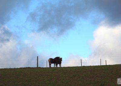 Pferde in Sailauf
