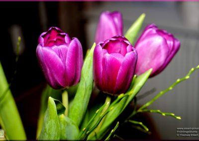 Frühlingsblume 090