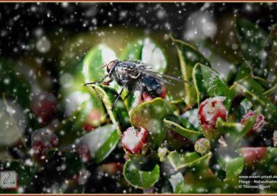 Fliege Macro 010